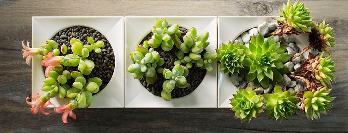 Plantas para oficina LeGrow módulos | Muebles de oficina Spacio